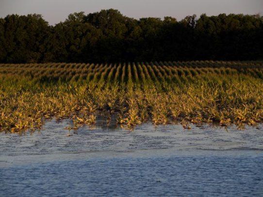 Misión comercial holandesa impulsará el sector hidroambiental en Panamá