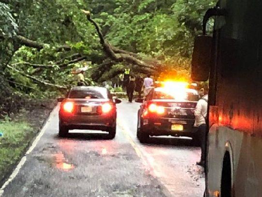 Árbol cae sobre camión y causa la muerte de una persona en Chiriquí