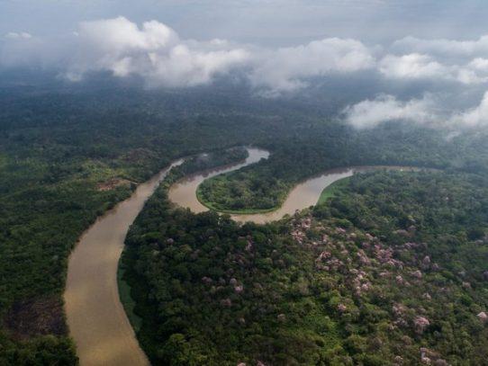 Suspenden por un año las concesiones forestales dentro de bosques del país