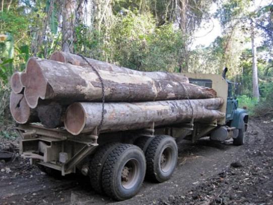 Moratoria por un año a prohibición de permisos de tala en el país