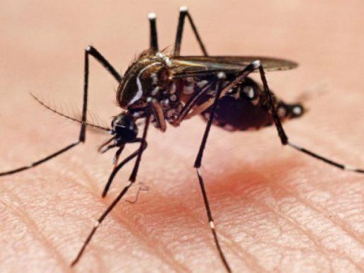 Atención: Primeros casos de dengue en la provincia de Veraguas
