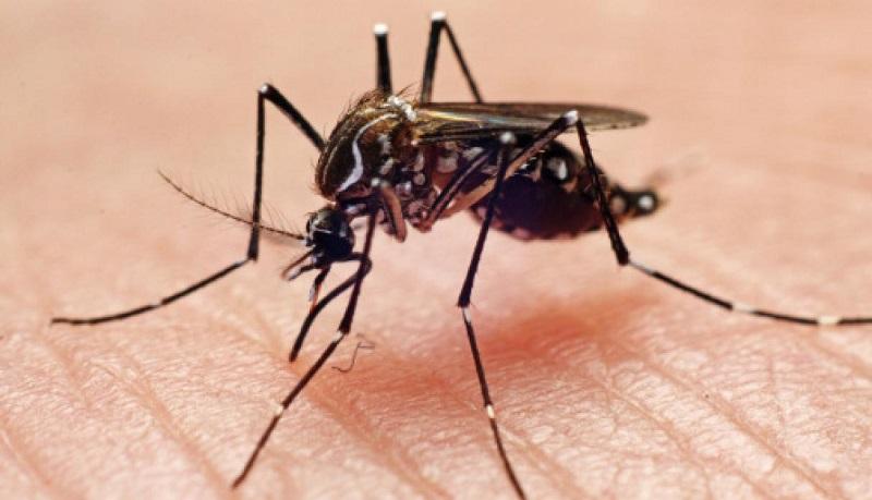 Declaran vigilancia sanitaria nacional ante confirmación de mil 50 casos de dengue