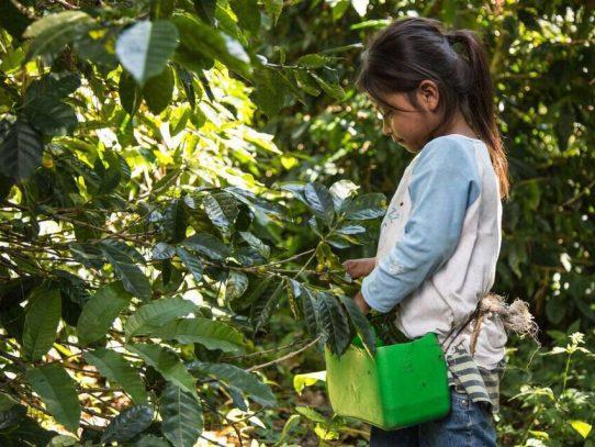 Autoridades realizan operativo para la prevención del trabajo infantil