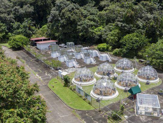 Smithsonian estudia en Panamá efectos del cambio climático en bosques tropicales
