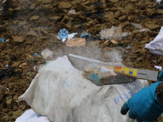 Autoridades destruyen 31.3 toneladas de sustancia ilícita