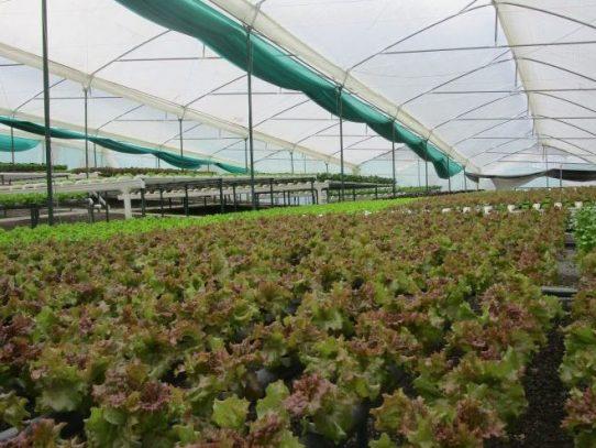 Gobierno busca potenciar cadenas productivas con la creación de agroparques