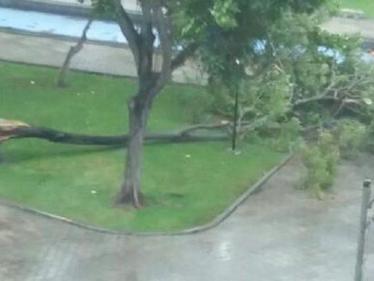 Lluvia y fuertes vientos dejan árboles caídos en la capital