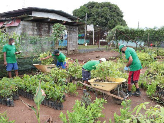 Sembrando Paz dona mil 200 plantones a Mi Ambiente