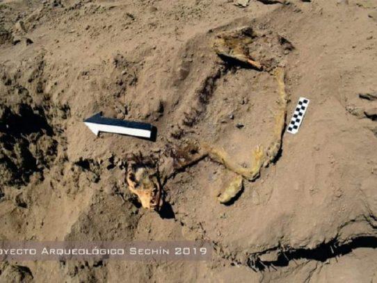 Hallan sepultado en Perú restos de un perro de hace más de mil años
