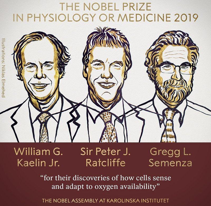 Nobel de Medicina a investigación sobre adaptación del cuerpo a niveles de oxígeno