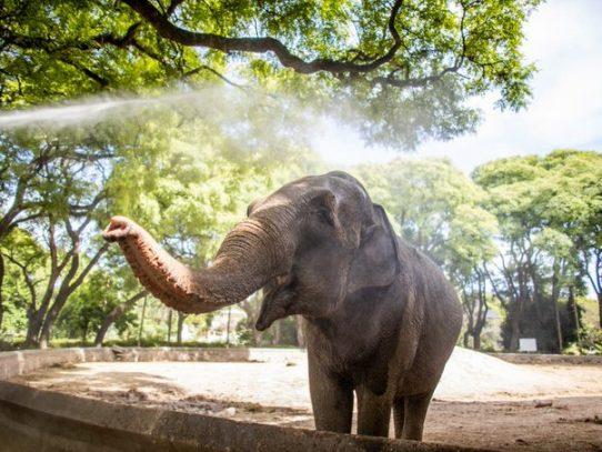 La elefanta Mara viajará de Argentina a Brasil por una vida mejor