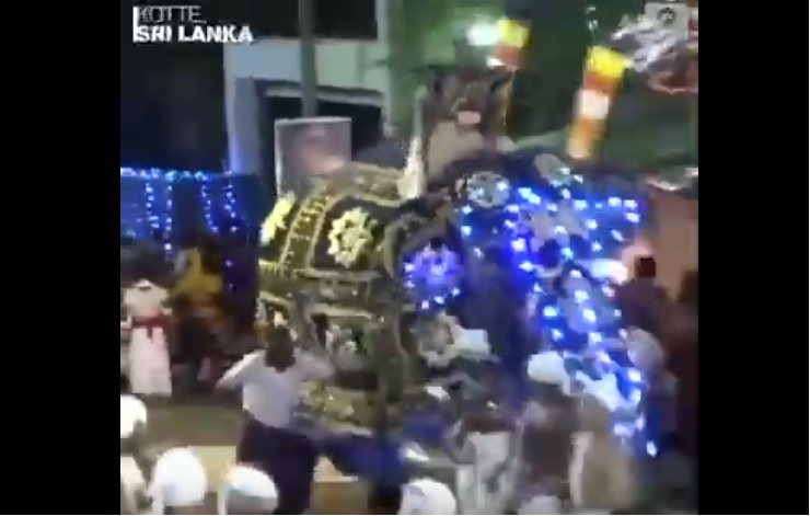 Un elefante causa corredera en Sri Lanka y deja 17 heridos en medio de festival