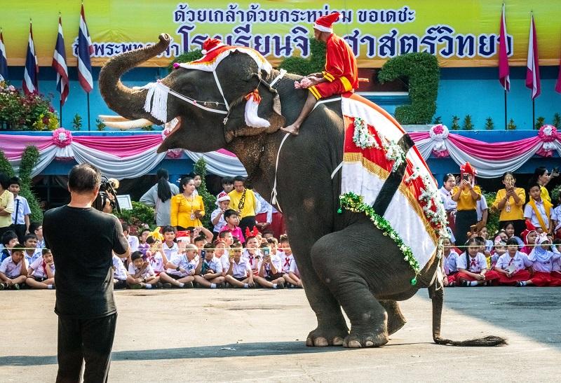 La esclavitud de los elefantes en Tailandia por el turismo animal