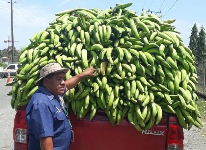Se emitirá salvoconducto para los productores agropecuarios