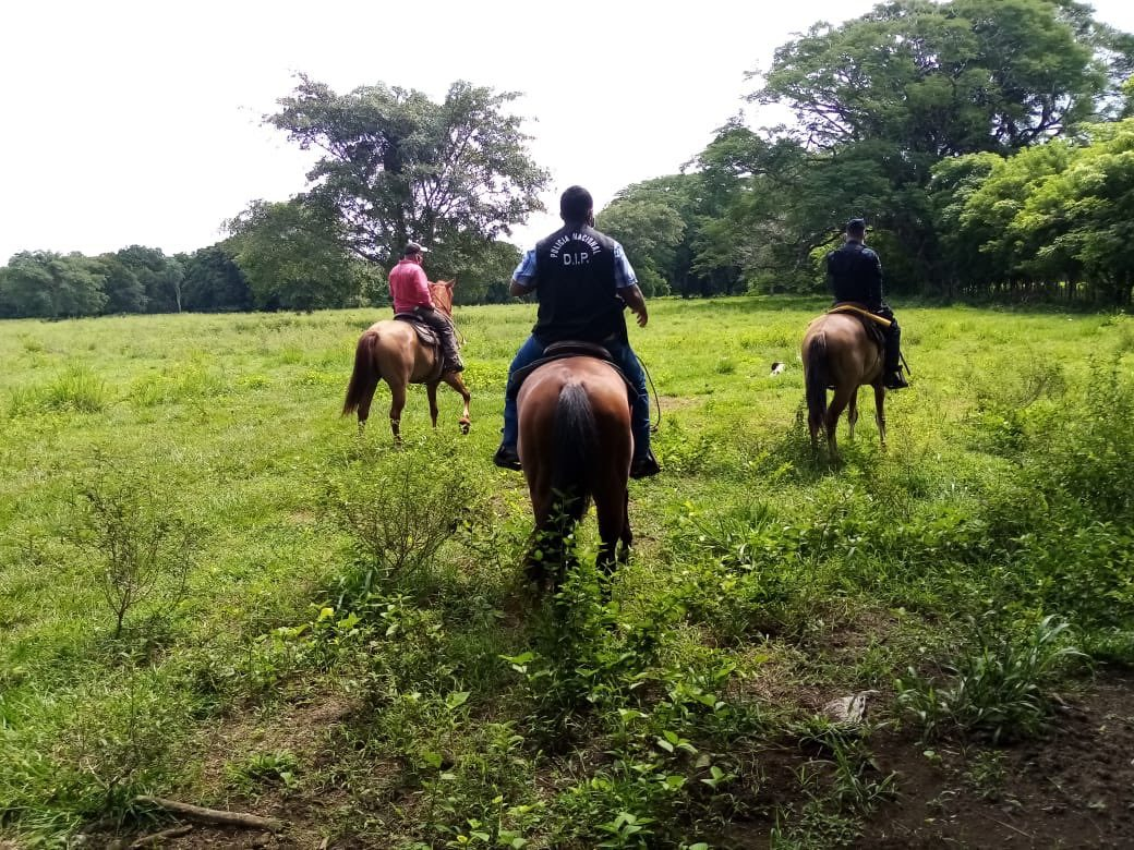 Policía realiza patrullajes a caballo para combatir el hurto pecuario en Chiriquí