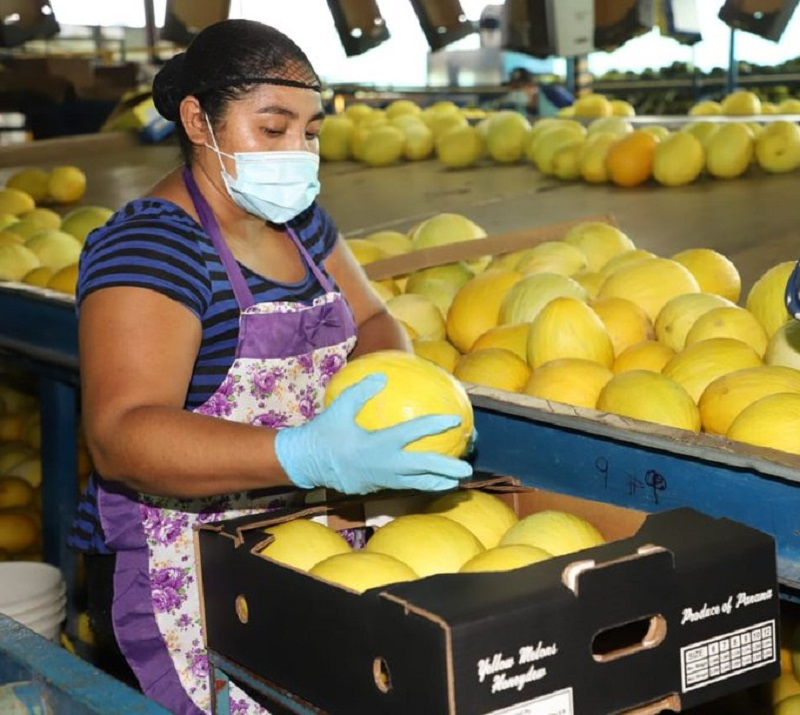 Panamá reanuda exportación de sandía y melón hacia Europa