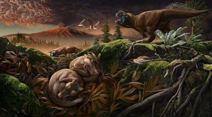 Nuevos fósiles revelan cómo los mamíferos desarrollaron la audición