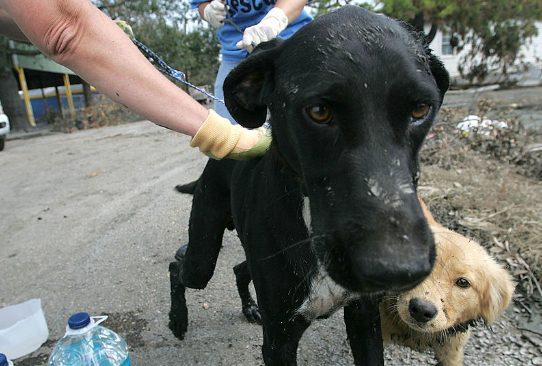 Un perro salva a un bebé enterrado en el campo en Tailandia