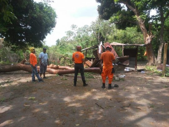 Construirán vivienda a familia afectada por caída de árbol en San Carlos