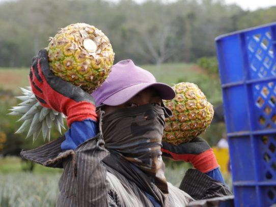MICI anuncia inscripciones para proyecto 'Agroindustrias Competitivas'