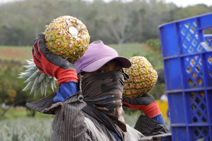 MICI impulsará la competitividad de 100 agroindustrias al nivel nacional