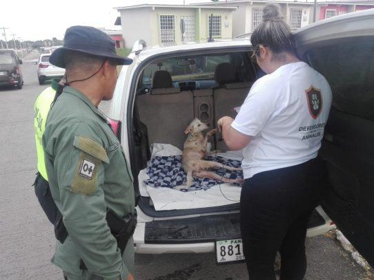 Tenían el hueco listo para sepultar a una perra en Pacora
