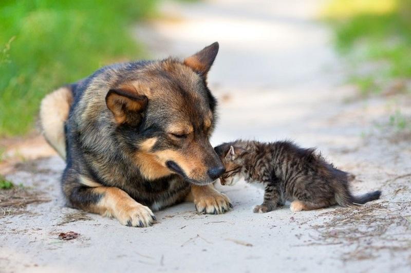 Gran recolecta nacional en beneficio de los animales desamparados - En Segundos
