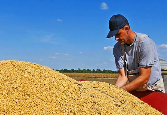 La soja sigue debilitada por la tensión comercial EE.UU.-China