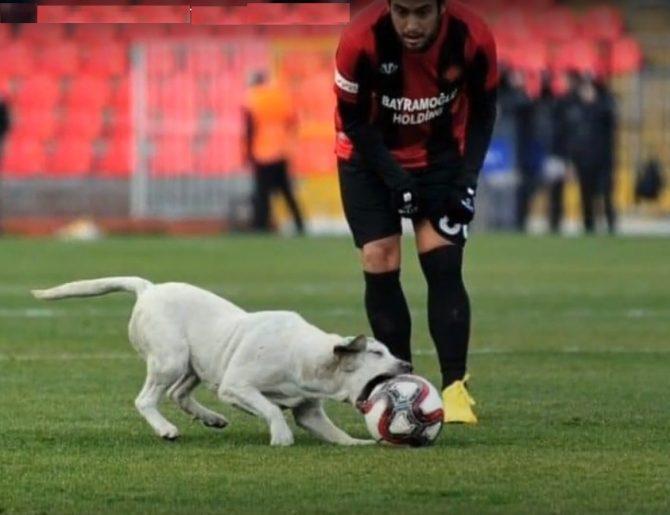 Perrito futbolista se roba la atención y el balón en partido de la liga turca