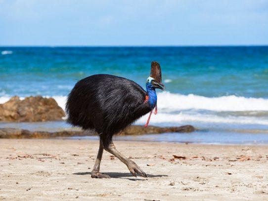 ¿Cuánto pagarías por esta ave que mató a su dueño?
