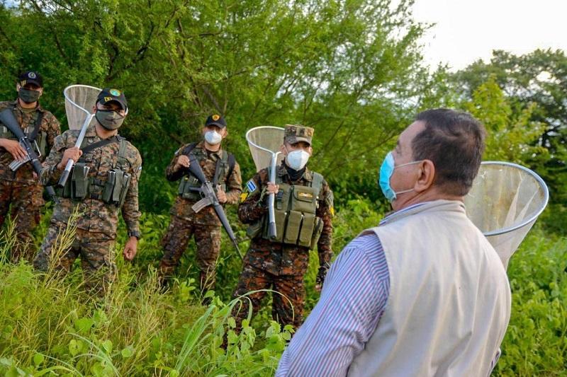 El Salvador combate plaga de langosta que amenaza agricultura centroamericana