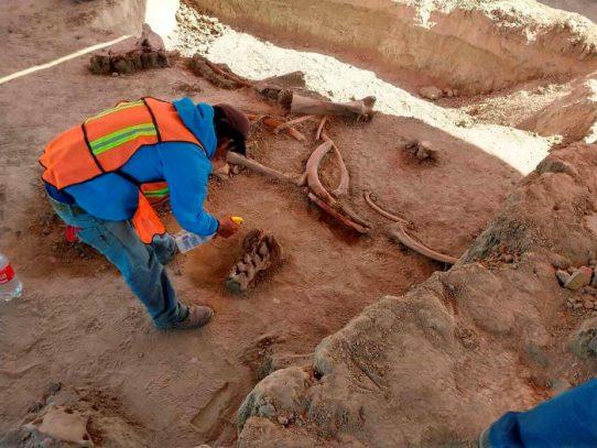 Se descubren los restos de sesenta mamuts en México