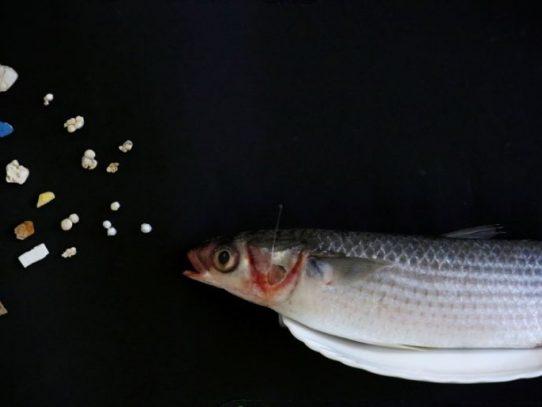 Microplásticos en el agua potable no son por ahora un peligro sanitario (OMS)