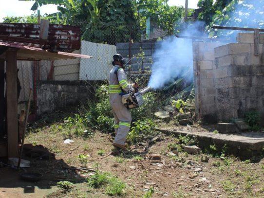 Eliminar criaderos de mosquitos para evitar el dengue: exhortación del MINSA