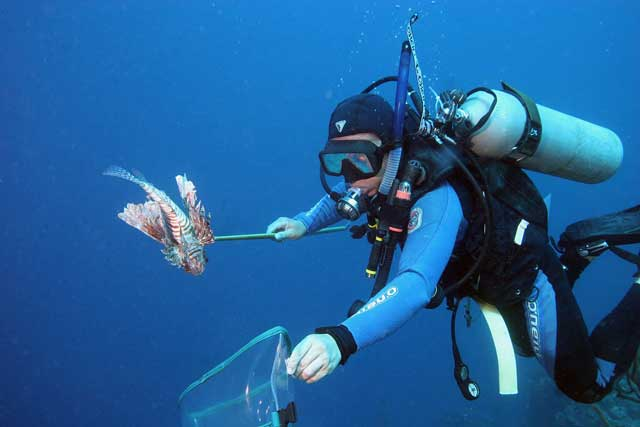 Realizan torneo de captura de pez león en el marco del Mes de Los Océanos