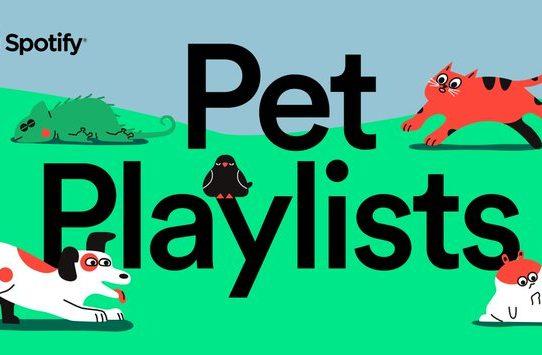 Spotify crea listas de música para mascotas solitarias