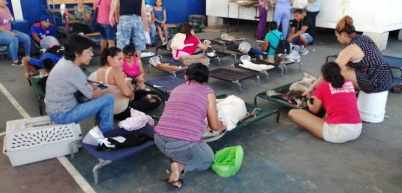 Jornada de esterilización de mascotas en Santa Ana este 7 de diciembre