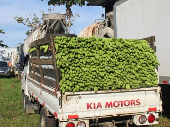 MIDA investigará contrabando de plátano en Bocas del Toro