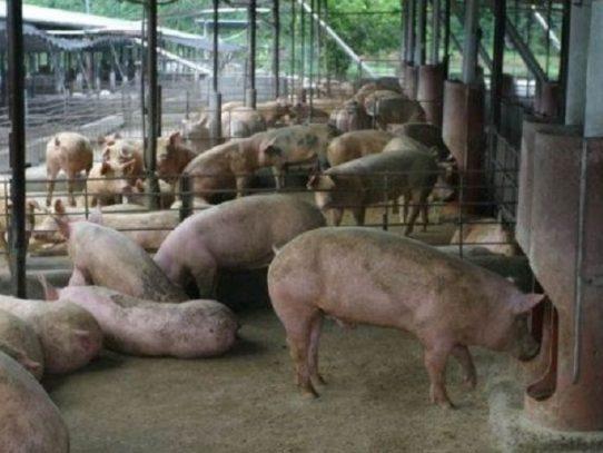 MICI ordena investigación para posible aplicación de medida de salvaguardia global sobre importaciones de carne de cerdo