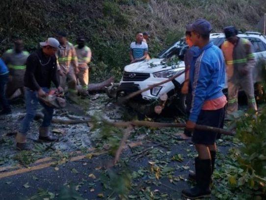 Árbol cae sobre un auto en Pedro Miguel