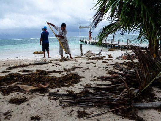 """El sargazo que invade las playas del Caribe y el Golfo de México es """"la nueva norma"""""""