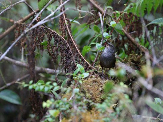 Investigadores descubren nuevas especies de aves en islas remotas indonesias