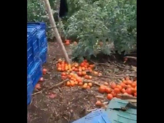 Expresidente Martinelli pide apoyo para comprar tomates a un productor