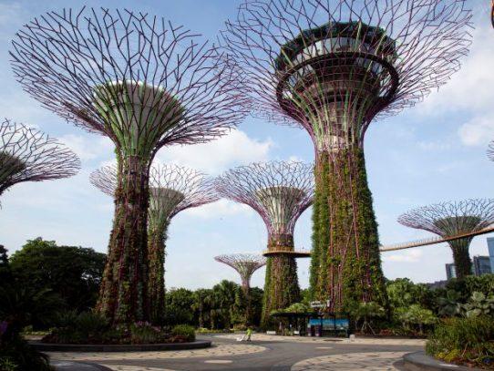 Parecía que Singapur había controlado el coronavirus, hasta que se duplicaron los casos