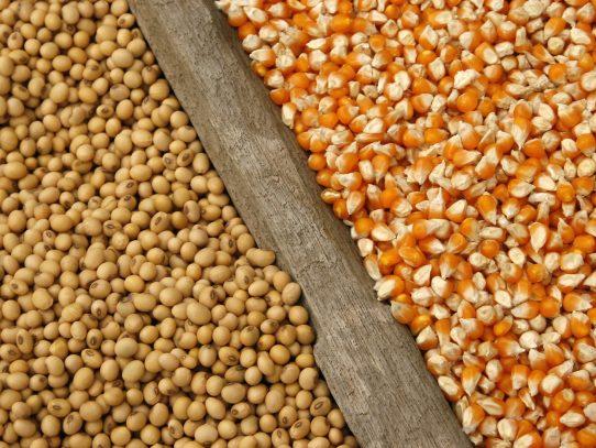 El maíz y la soja caen en EE.UU. al atenuarse las lluvias