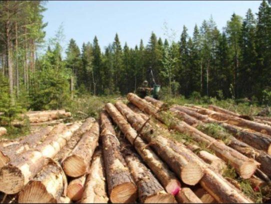 MiAmbiente emite resolución que suspende permisos para la tala de árboles
