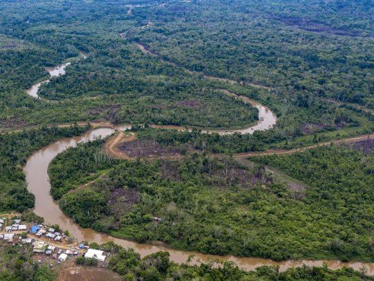 Narcotráfico acentúa deforestación en Darién