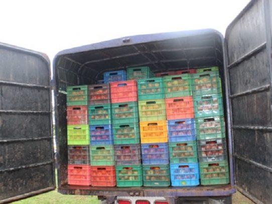 Decomisan 350 cajas de tomate de presunto contrabando en Chiriquí