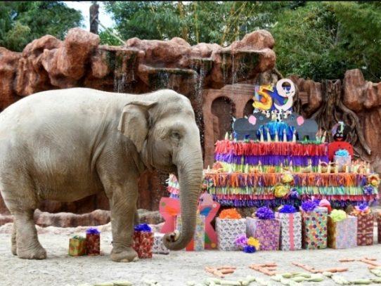 Celebran 59 años de la elefanta Trompita en zoo de Guatemala