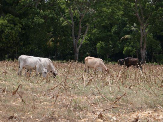 Gobierno instala comisión que atenderá plan para mitigar efectos de la sequía en Azuero